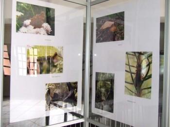 Miniatura zdjęcia: Sejmik w obronie praw przyrody - ZSOIE_8d.jpg